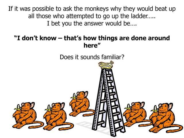 Monkeys_InsideIIM